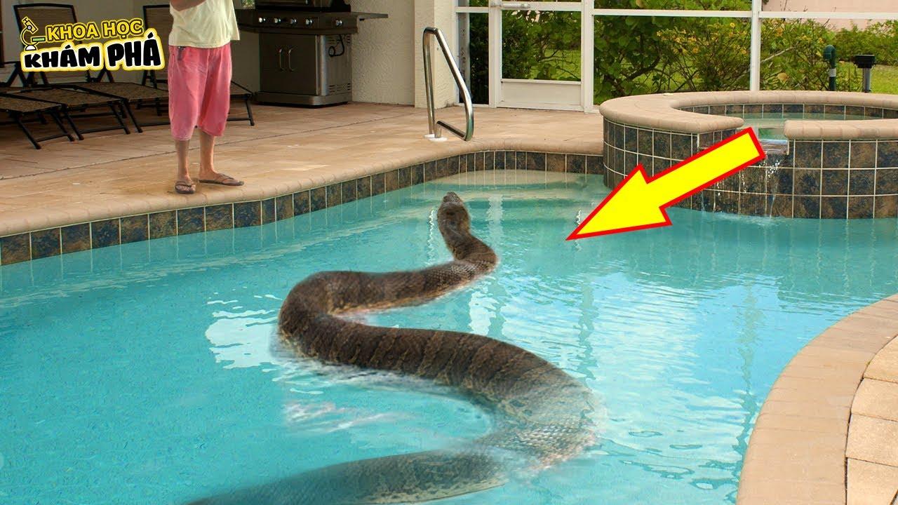 ⚡7 Con Vật Kỳ Lạ Nhất Được Tìm Thấy Trong Bể Bơi Khiến Chủ Nhà Sợ Chạy Mất Dép
