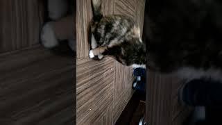 Наша кошка странно себя ведёт???