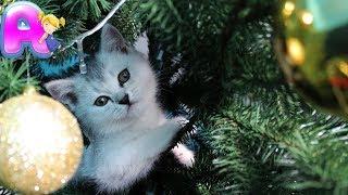 Смешные Коты и Кошки - Мася на елке