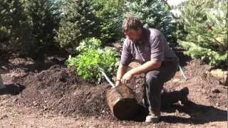 Warner's Nursery Tree Planting Tips