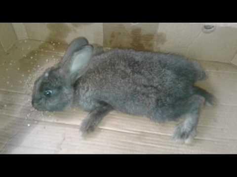 Декоративные кролики чем болеют