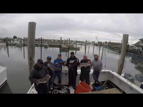 Dojo Fishing -Cape May  4/17/17 -Fishing Fever Blackfish Re -upload