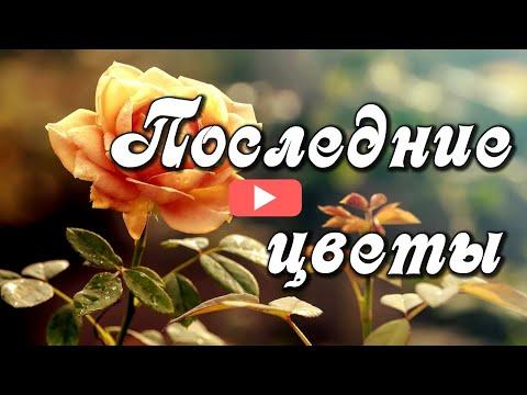 Последние цветы - улыбка Осени. Последние цветы, прощайте до весны!