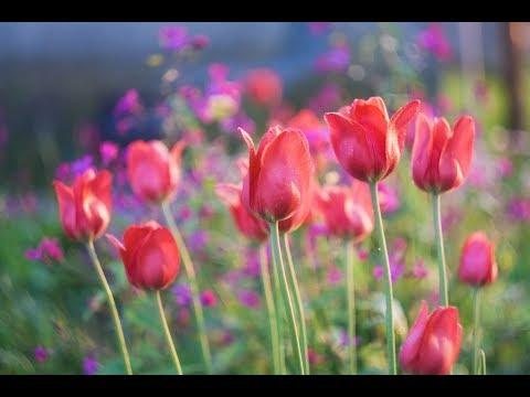 مهرجان الزهور الدولي في بغداد يجذب آلاف الزوار  - نشر قبل 2 ساعة