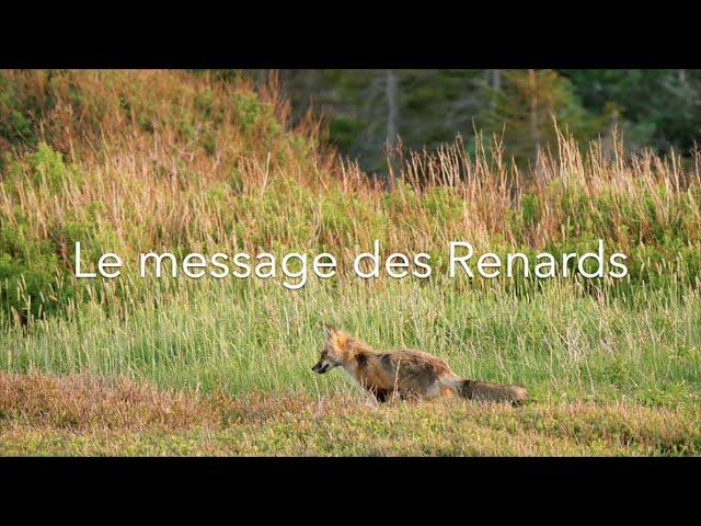 Message des Renards aux humains