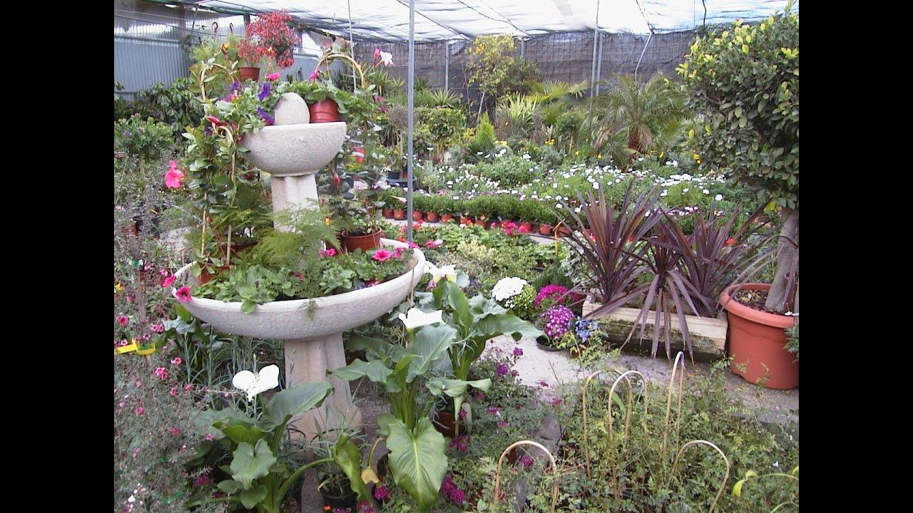 Vivero de plantas ornamentales primera parte youtube for Viveros de plantas en lima