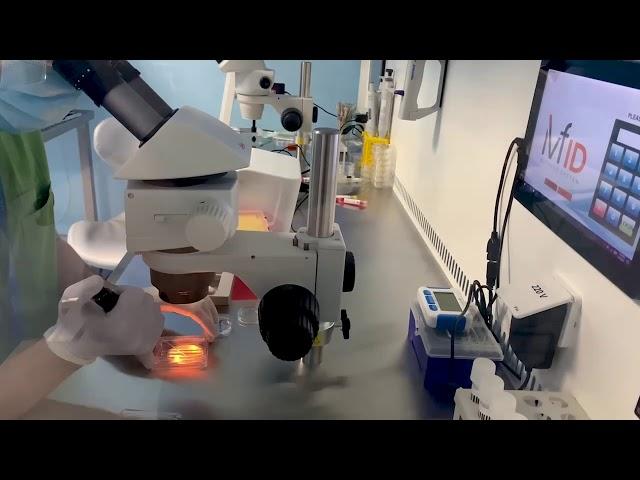 Piezo electric oocyte activation