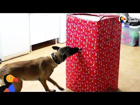 Dogs Open Best Christmas Present EVER | The Dodo