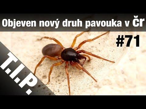 TIP#71 Nový druh pavouka v ČR, objeveno tisíce Mayských staveb, Největší větrná elektrárna na světě