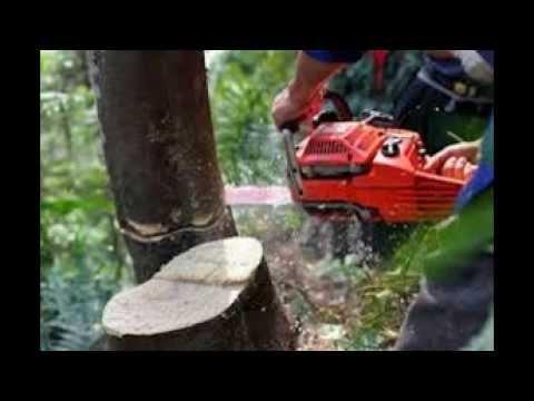 tree-service-portsmouth-va-|-757-839-3147