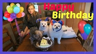 Happy Birthday To Our Dogs & Giveaway!