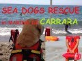 Men and Dogs in Sea Rescue togheter