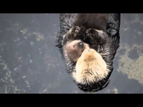 Mother Otter hug she's baby so cute