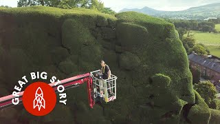 What It Takes to Maintain the Biggest Hedges in the U.K.