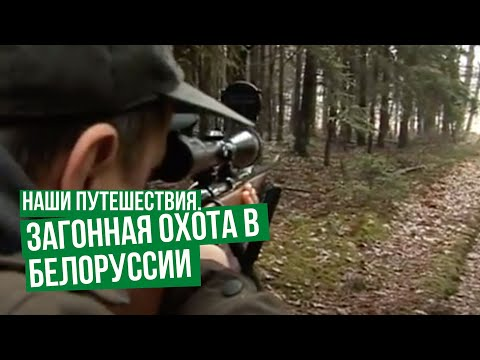 Наши путешествия. Загонная охота в Белоруссии