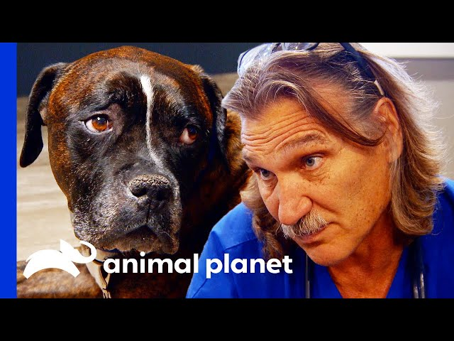 Dog Has Untreatable Cancer | Dr. Jeff Rocky Mountain Vet