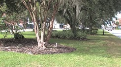 Welcome to Avon Park, Florida