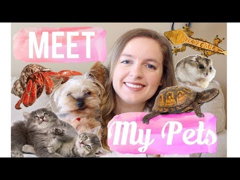 Meet My Pets (All 12) + Their Rescue Stories