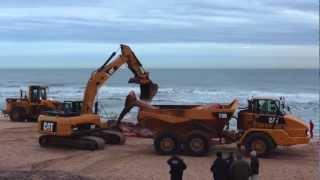 Whale Removal Napeague Beach