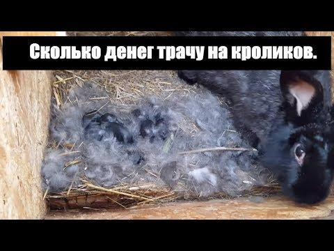 Сколько денег трачу на кроликов.