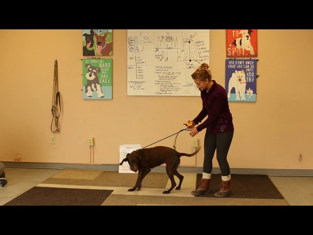 Dogs Who Serve- Service Dog for a Young Child- Ty the Dog Guy- Utah Service Dogs