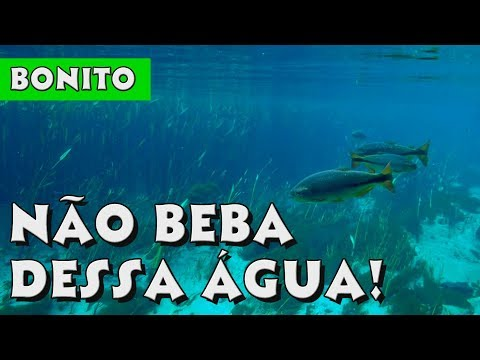 O QUE FAZER EM BONITO MS? TUDO SOBRE O MELHOR DESTINO DE ECOTURISMO DO BRASIL | Viaje Por Conta 38