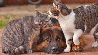 Самые смешные животные Приколы с котами и собаками 2021 16