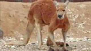 Top 10 Best Jumper Animals!