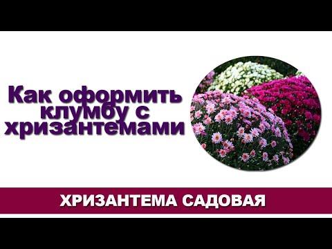 Хризантема садовая [ Хризантемы в ландшафтном дизайне ]