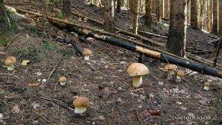 Справжні гриби Карпат
