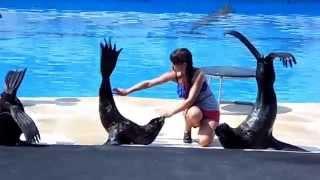 Морские котики.Дельфинарий.г.Севастополь. 2013 г.