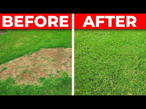 How to Fix a Bare Spot in the Lawn - 3 Tips for Fast Repair