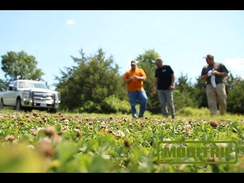 Food Plot Hunting Pressure With Chuck Sykes And Lee Lakosky - The Management Advantage