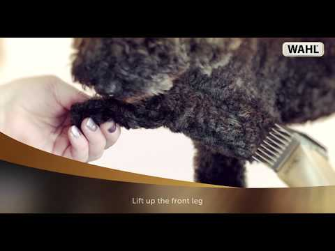 WAHL - Dog Clipping Tutorial