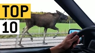 Top 10 ciudatenii pe care le-au vazut unii oameni in timp ce conduceau masina :))