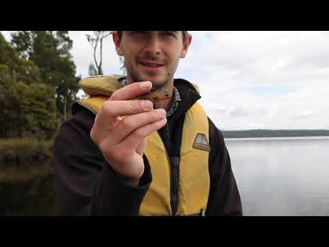 Lake Brunner Fishing Secrets