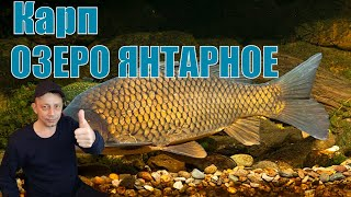 Трансляция игры Russian Fishing 4 Ловим КАРПА на ЯНТАРНОМ