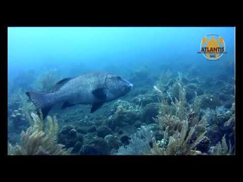 Atlantis Introduction Dive Course