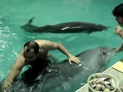 Член дельфина порно онлайн
