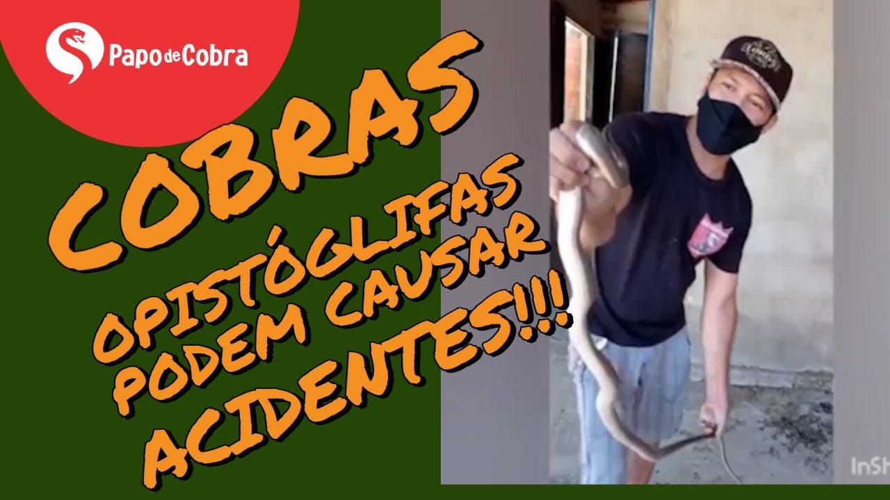 Corredeira - Philodryas nattereri - Cobras opistóglifas podem causar acidentes | Papo de Cobra