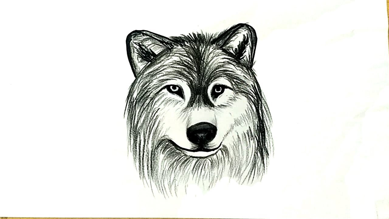 How to Draw a Wolf Head - YouTube