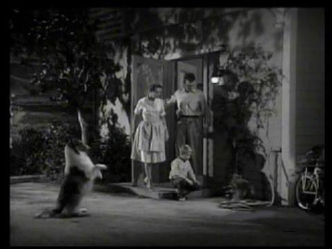 """Download Lassie - Episode #272 - """"Lassie's Protégé"""" - Season 8 Ep.17  - 01/07/1962"""