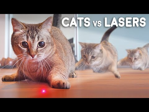 Cats Vs Lasers
