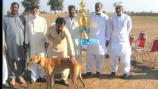 Ali Gondal's Dog race.mpg