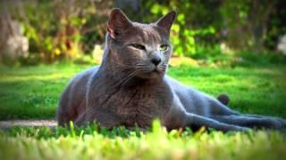Копия видео Кот на траве живые обои на Windows 7, Windows Vista