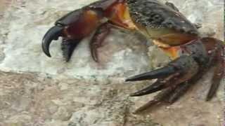 Развивающее видео для детей от года - Обитатели моря