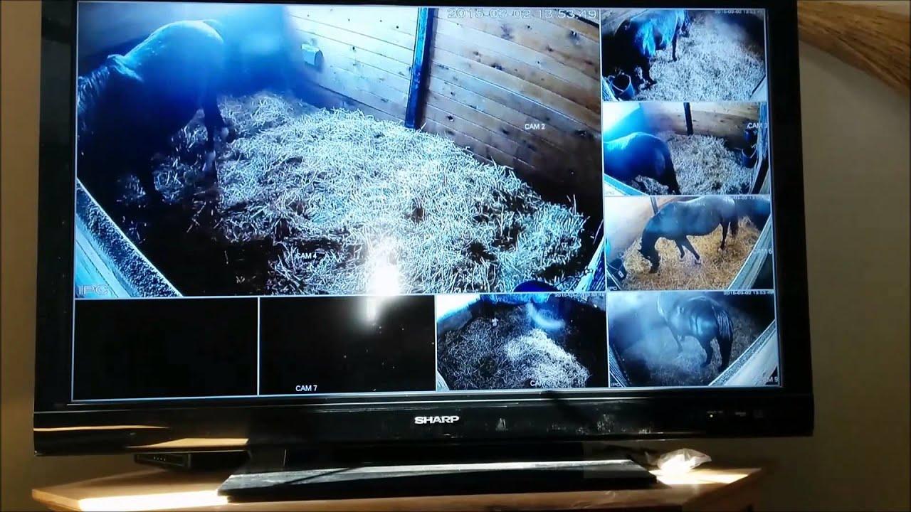 Foaling Cameras - Calving Cameras - Barn Monitoring ...