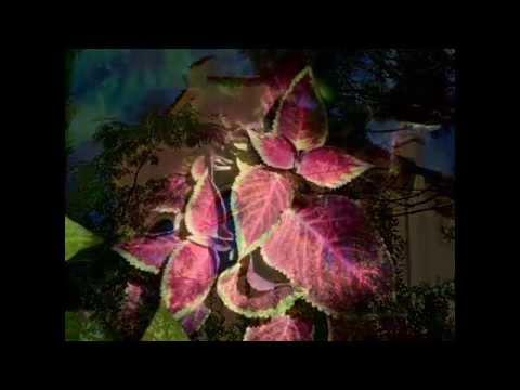 Botanischer Garten- Schloss Trauttmansdorff/Castle bei Meran