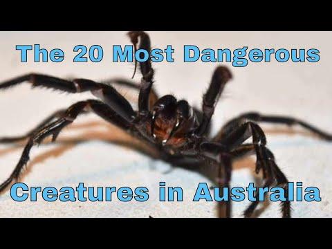 The 20 Most Dangerous Creatures in Australia