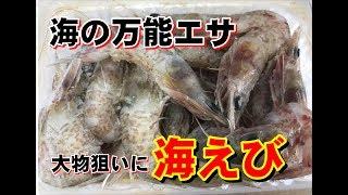 海エビの針の付け方説明 海釣り初心者入門 和歌山釣太郎